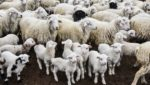 Schweden und die Herdenimmunität
