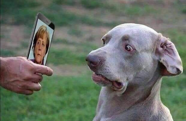 Merkel unbeliebteste Politikerin Deutschlands